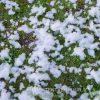 Sneeuwmachine sneeuw huren - Partytentverhuur Groningen